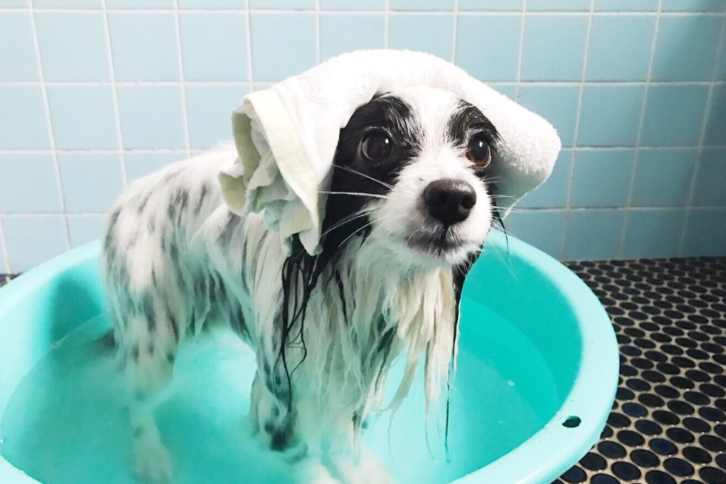 犬用お風呂